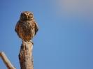 Proyecto piloto análisis de la migración de las aves