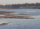 Waterbirds  in Oued Souss_1